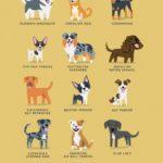 Cães de Origem Americana