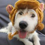 Foto Celebridade Pet