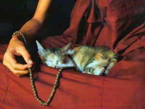 gatos-budismo