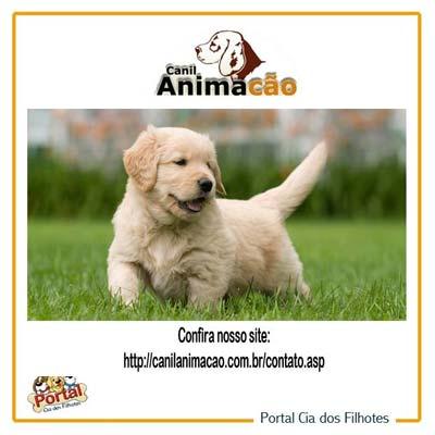 animacao400